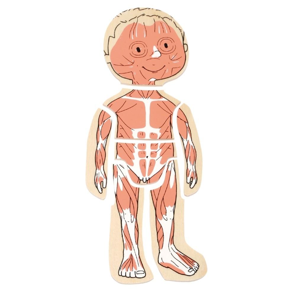Fantastisch Menschliche Körper Diagramm Kinder Fotos - Menschliche ...
